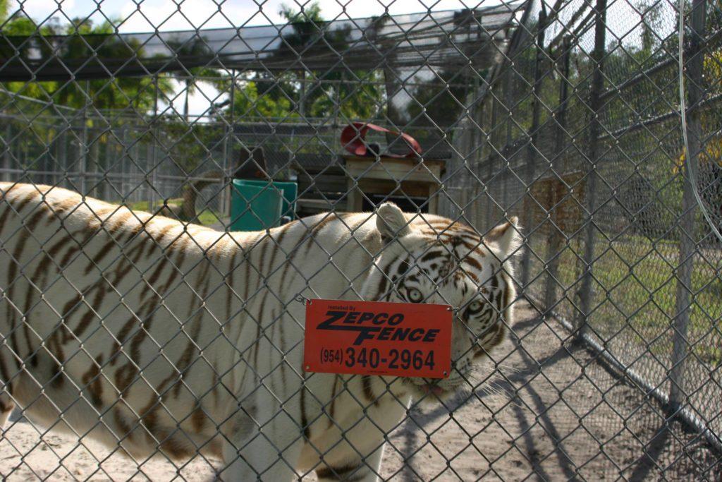 animal fence enclosures